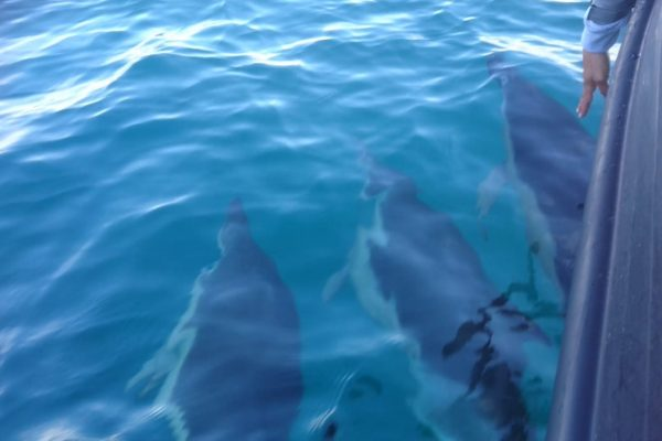 Hand pointing at 3 dolphins in water